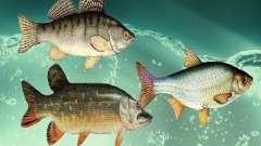 Nouveaux poissons (eau douce)