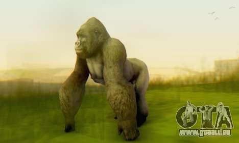 Gorilla (Mammal) für GTA San Andreas her Screenshot